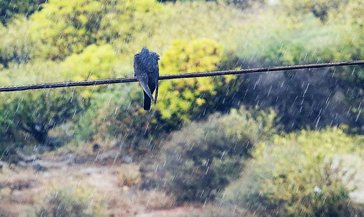 Rainy Days Birds🐦⛅ Water Nature Tree Grass No People Day Outdoors Close-up Sky Canarias Clouds And Water