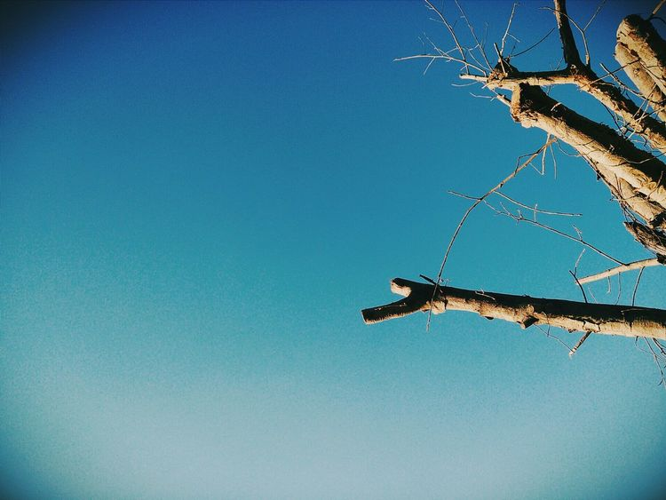 Trees VSCO Sky Bluesky Taking Photos