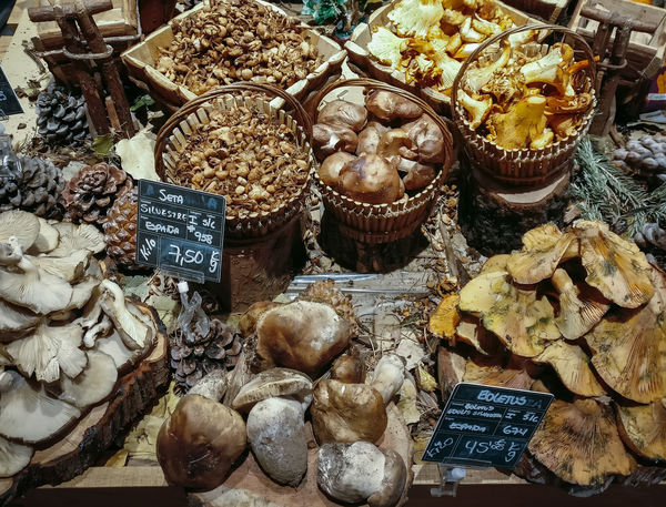 Many different edible mushrooms in baskets on food market. Gourmet food. Autumn Mushrooms. Agaricus Bisporus Autumn Craterellus Cornucopioides Diet Marasmius Oreades Mushrooms Porcini Boletus Chantarelle Edible Mushroom Edulis Fall Food Forest Fungi Fungus Organic Saffron Milk Scotch Bonnet Vegetable Wild