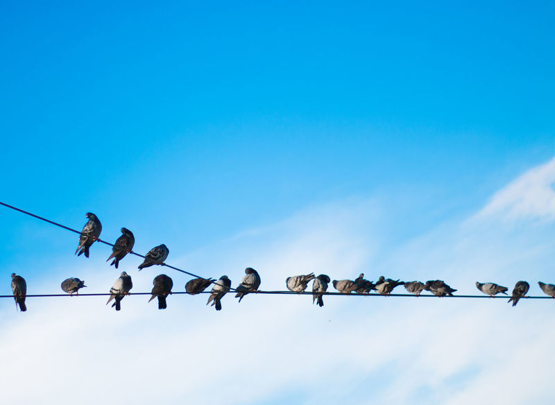 Background Bird Birds Blue Blue Sky Cable Cloud Clouds Day Dove Doves In Line LINE Low Angle View Nature No People Outdoors Pigeon Pigeon Bird  Pigeons Power Cable Power Line  Side By Side Sky Sky And Clouds