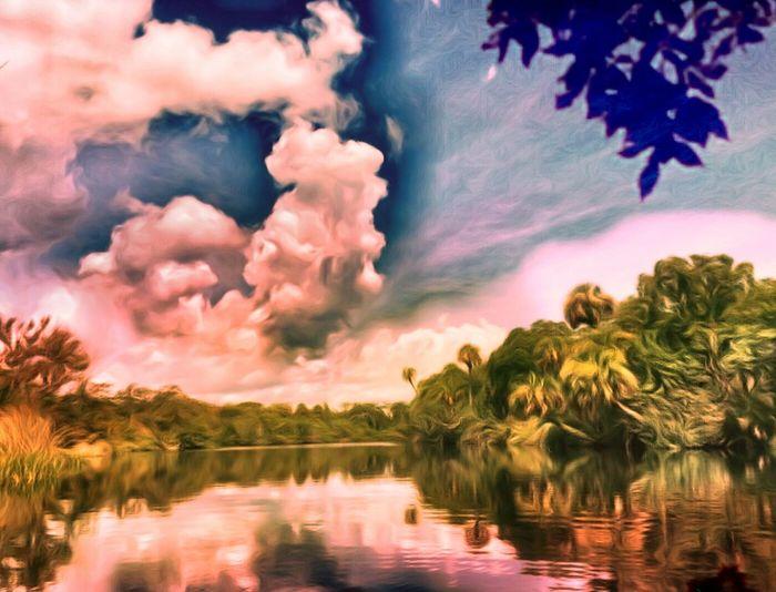 A Connectcut Tree peeking into A Florida Landscape . homesick for the St Sebastian River, Sebastian, Fl From My Kayak Hidden Gems  Double Exposure Pivotal Ideas
