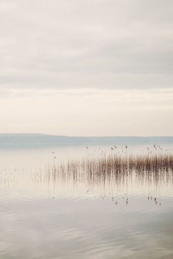 Animal Themes Beauty In Nature Calm Water Day Grass Horizon Over Water Lake Nature No People Outdoors Reed Reed - Grass Family Reeds Reflection Scenics Sky Sunset Tranquil Scene Tranquility Water Waterfront