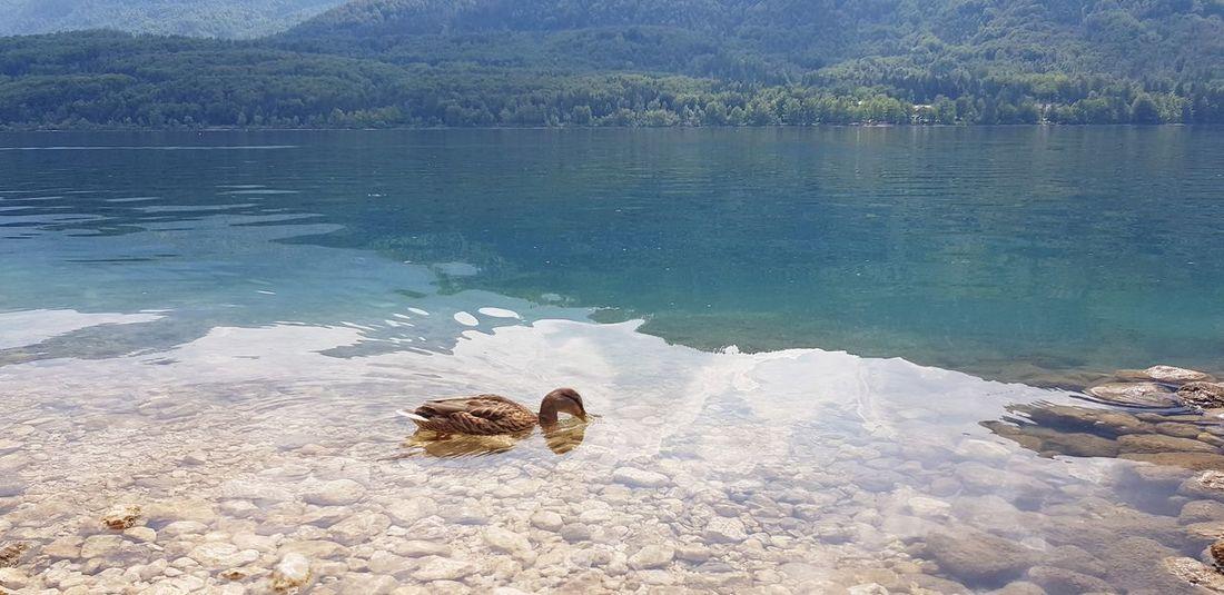Duck In The Lake EyeEm Selects Water Beach Sea Sea Life UnderSea Sand Sky Calm Countryside Standing Water Horizon Over Water Lake EyeEmNewHere
