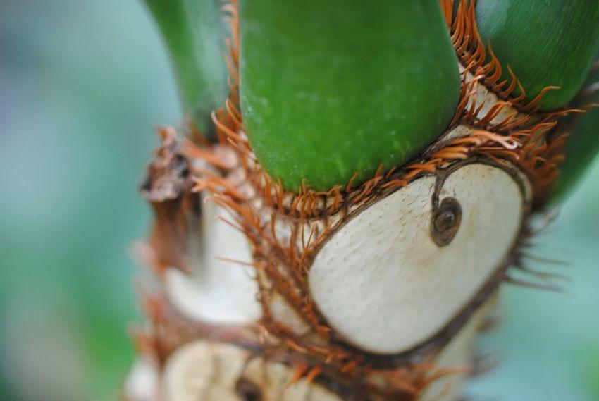 Macro Photography Plant Flower Close Up Macro Nature Macro_collection EyeEm Best Shots - Macro / Up Close