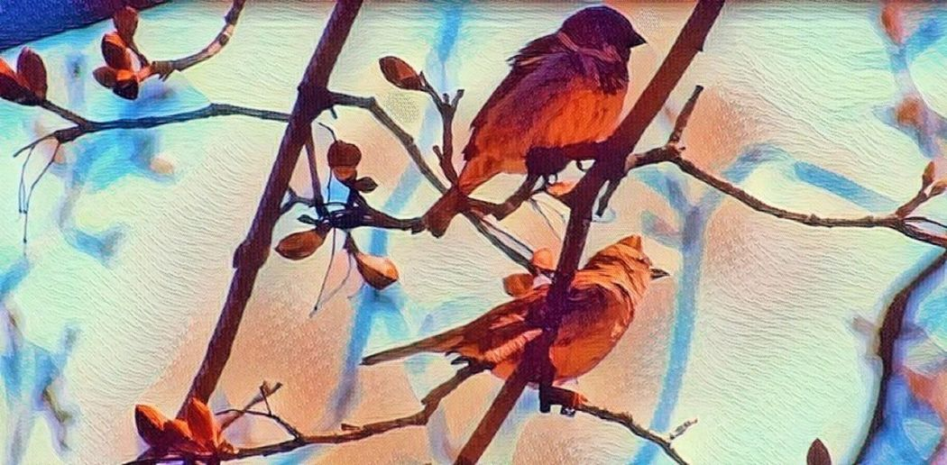 Sparrow Couple Animal Themes Animal Wildlife Animals In The Wild Beauty In Nature Bird Close-up Multi Colored Nature Outdoors Perching Sky Sparrow Birds Usa Water