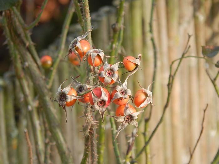 Nature Garden Delicate