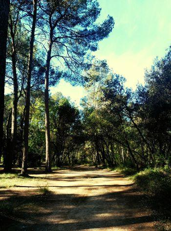 Porque todos los caminos llevan a ... uno mismo Naturelove Naturelovers Natural Beauty Nature Photography Arbres Tree_collection  Camins Lifenature Naturaleza Natura Nature_perfection Nature_collection