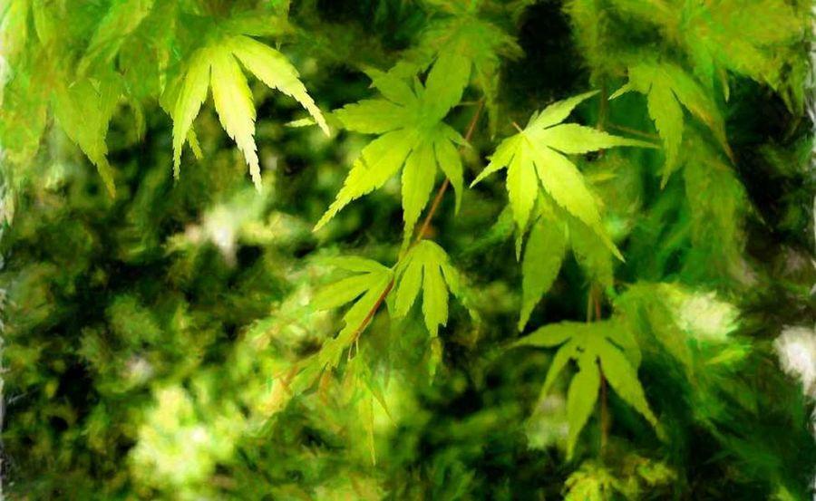 green lives зеленые листья