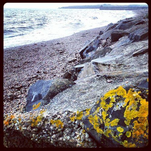 'Rocks' Ravenscraig Kirkcaldy Fife  Today Moss yellow Rocks cloudatlas Cloudreality Clouds Cloudporn skyporn Skysnappers sky Beach Seascape Seaview Sea Instagrampolis instamob insta_underdog instahub Photography