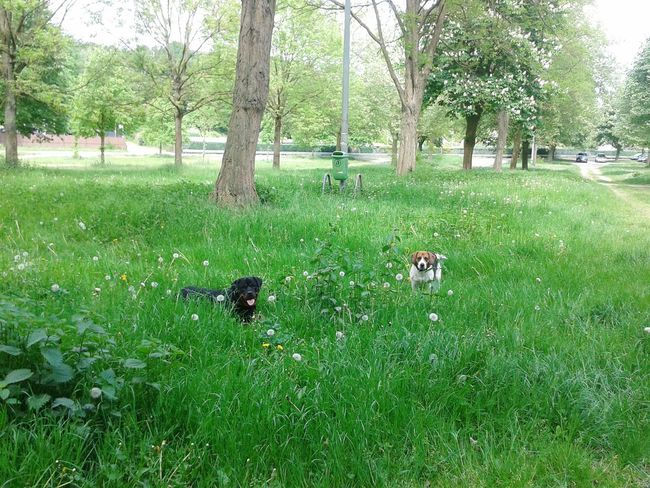 Freya und Pasha Dogs Of EyeEm Hunderunde Dogs Hunde In Deutschland
