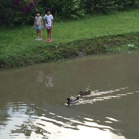 湖邊 童年 暑假 姐妹 👭 湖邊 散步 Sisters Love Family Lakeside Lake Ducks Taking A Walk Vacation Vacation Time Summer Summer Time  Happy Time Taking Photo