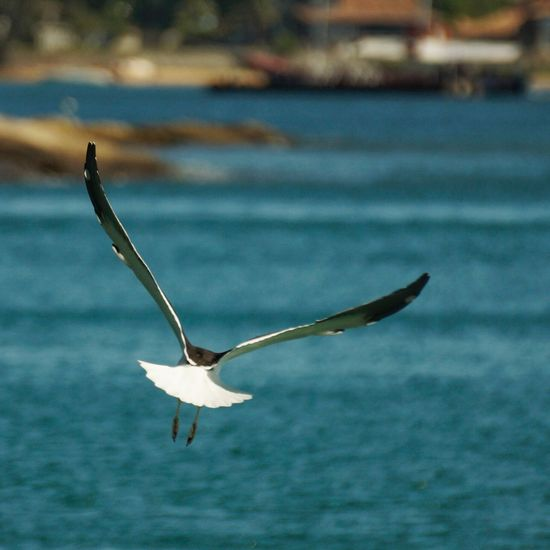 Seagull ın Flıght Flying Bird Animal Themes Animals In The Wild Spread Wings One Animal Focus On Foreground Nature No People Water Day Outdoors Animal Wildlife Beauty In Nature The Week On EyeEm