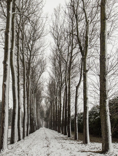 Dirt road along bare trees in winter