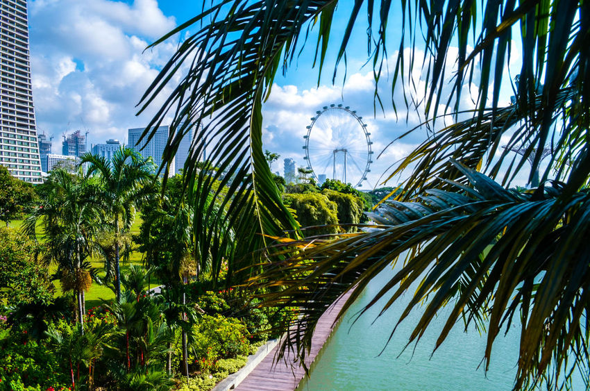 Beauty In Nature Garden Green Growth Nature Nikon Outdoors Palm Tree Sg Singapore Sky Sky And Clouds Swing Tree Trees VSCO Vscocam Water Wheel