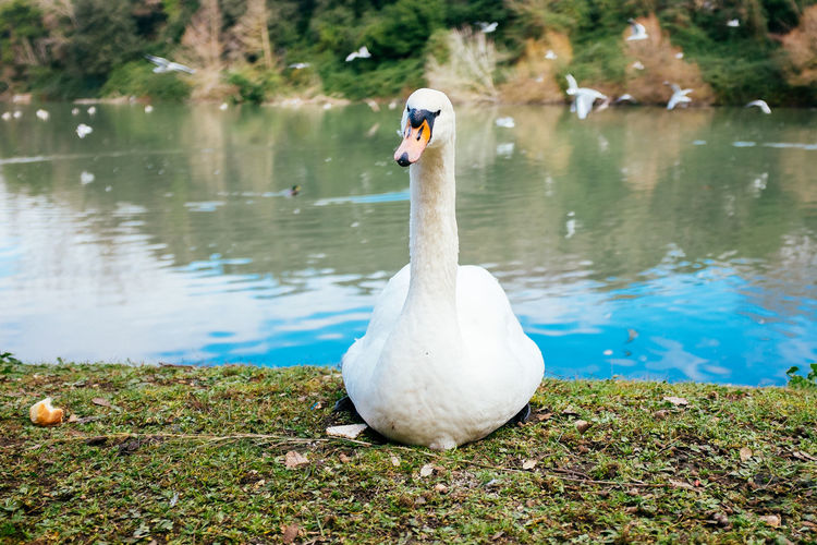 Hey there! Animal Themes Animals In The Wild Balance Beak Bird Duck Escapism Getting Away From It All Lake No People One Animal Showcase: February Side View Summer Swan Togetherness Two Animals White Wildlife Zoology