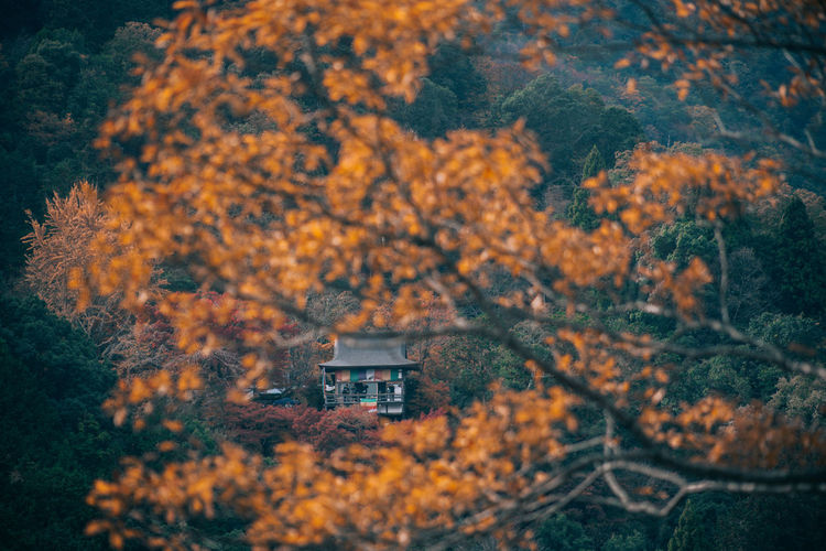 // autumn in kyoto // EyeEm Best Shots EyeEm Nature Lover Nature Autumn Autumn colors Autumn Leaves autumn mood Shootermag Shootermagazine AMPt_community Yellow Thedarksquare Tree Plant Change Built Structure No People Architecture Day Beauty In Nature Building Exterior Outdoors Building Growth Selective Focus Land House Scenics - Nature Forest Tranquility