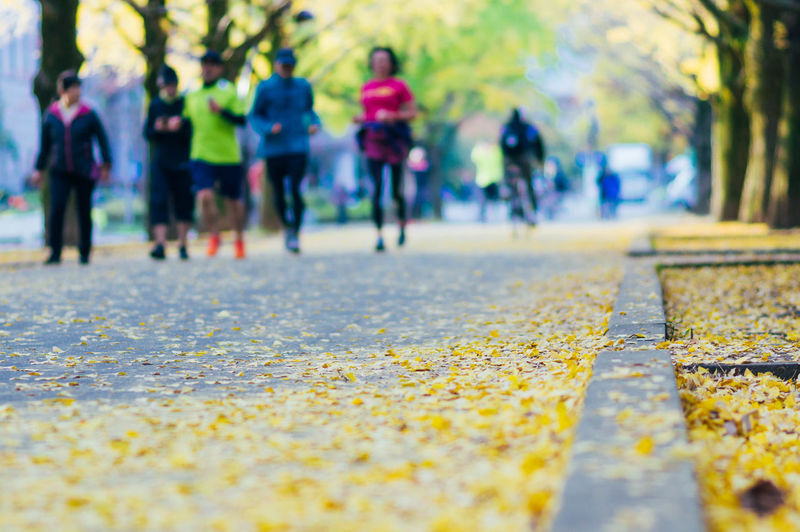 Surface level of road amidst autumn leaves in city