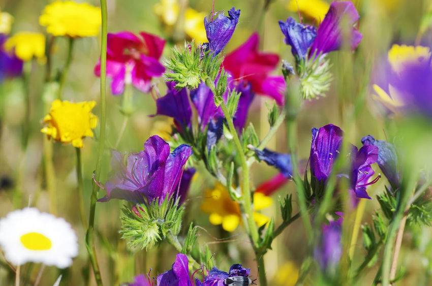 texture of wild flowers on fileld Wild Flowers Beauty In Nature Botany Close-up Flower Flower Head Flowering Plant Fragility Freshness Growth Lavender Nature Petal Plant Purple