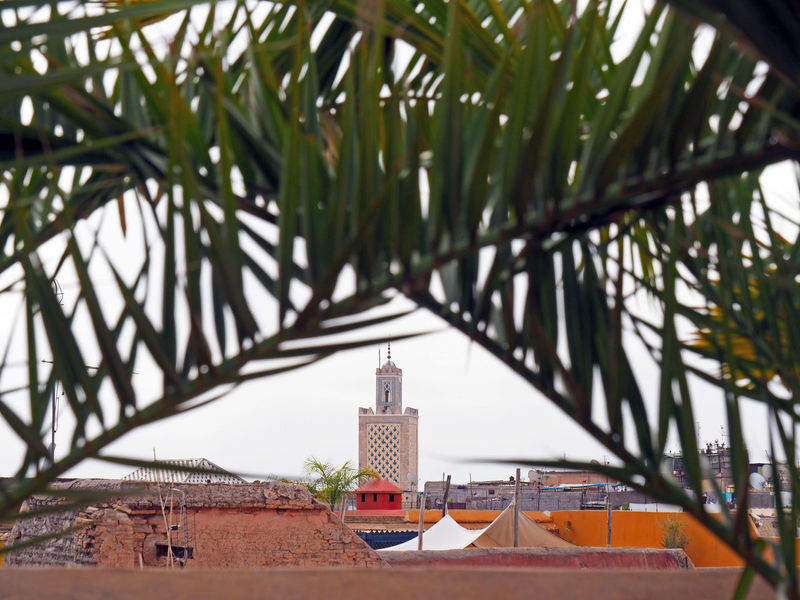 Architecture Built Structure Day Koutoubia Leaf Marrakech Morroco Nature Outdoors Palm Trees Residential Building Sky Tree Marrakesh Morocco