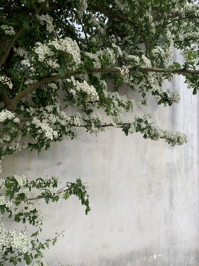 Close-up of flowering plant against wall
