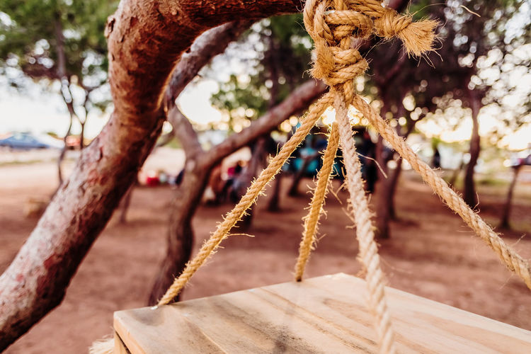 Close-up of rope tied to tree trunk