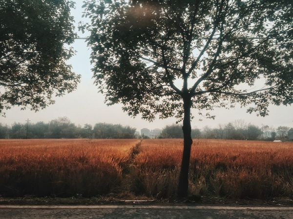 Tree Trees Field Nature EyeEm Nature Lover Landscape Beauty In Nature Scenics Outdoors Country Relaxing Enjoying Life