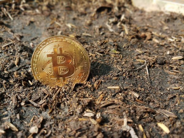 golden bitcoin Cryptocurrency System Digital Currency Bitcoin Golden Golden Bitcoin Coin Miner Animal Themes