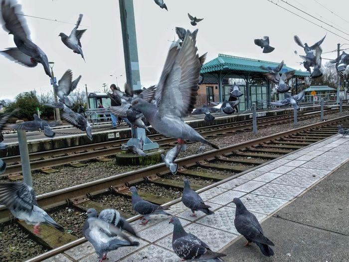 Birds of Flight II Birds Pigeons MotionCapture Action Transit Train Max