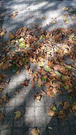 Fall Autumn Leaves Citylife Autumn Colors