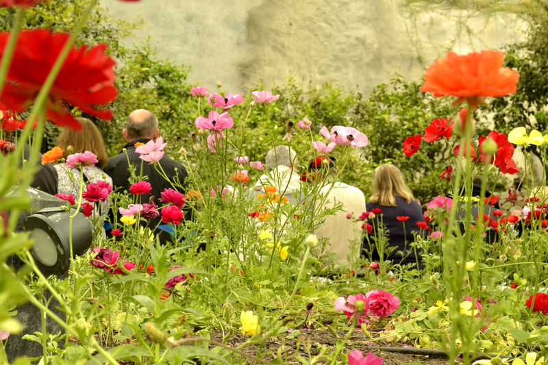 Adult Beauty In Nature BYOPaper! Child Day Flower Flower Head Flowerbed Flowers In Bloom Fragility Freshness Friendship Grass Growth Nature Nature Outdoors People People In Nature Plant Poppy Red Sitting Togetherness Young Adult