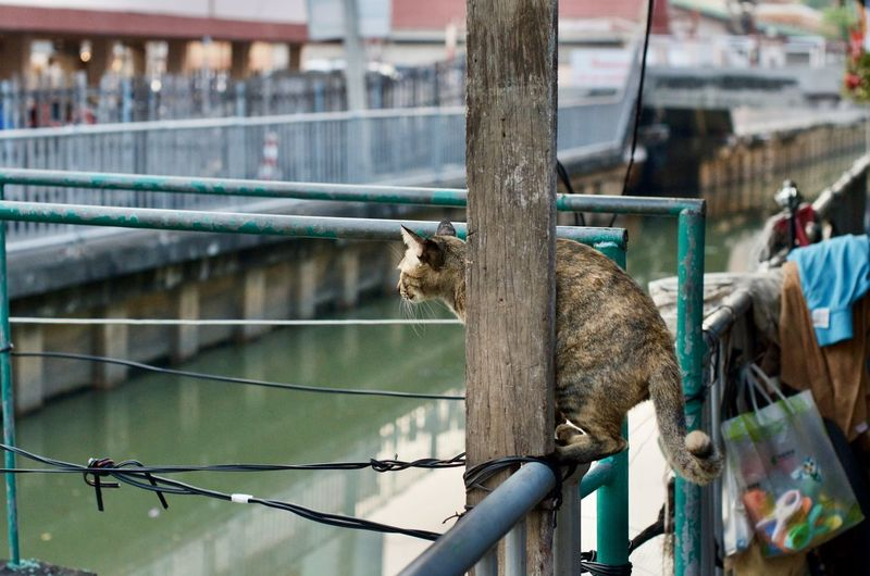 View of an animal on fence