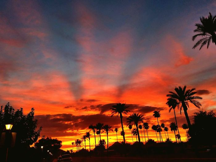 I've come to realize that the Arizona sunsets, look a lot like it's flag. Sunset, Plam Trees, Streetlights. Peaceful night. Hanging Out Taking Photos