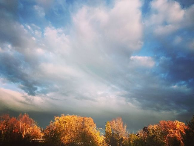 Pnw sky Fall Color Washington PNWonderland PNW Sky Beauty In Nature Nature Cloud - Sky Scenics Tranquility Low Angle View