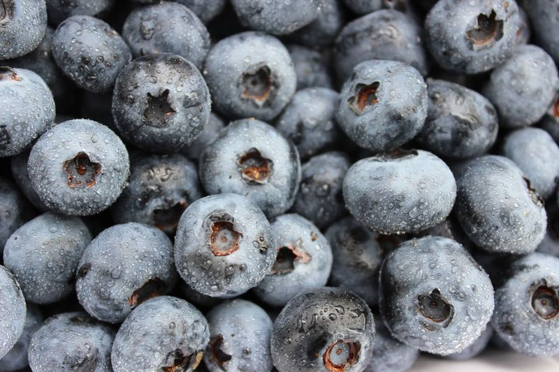 Blueberries Food And Drink Blueberry Backgrounds Full Frame Abundance Fruit Large Group Of Objects Food Healthy Eating Close-up Still Life Freshness Juicy Repetition Day Heap Round No People Retail  Vibrant Color Blue Blueberries Fruits Maximum Closeness