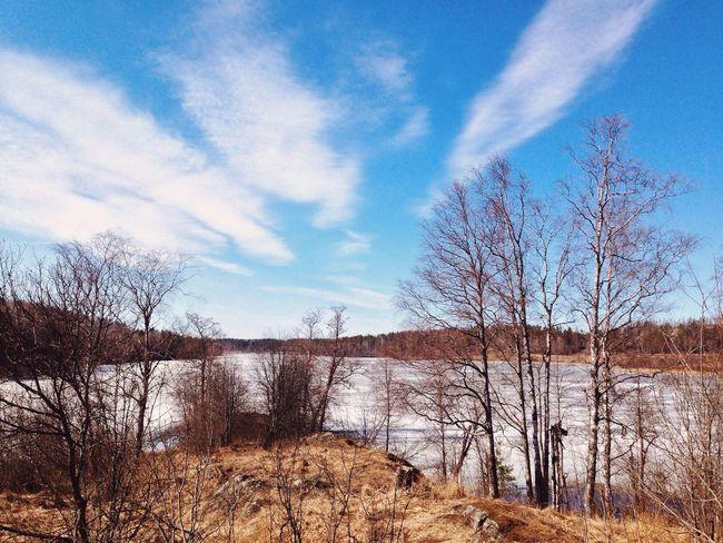Karelia Sea Nature Forest Sky Friends Freedom
