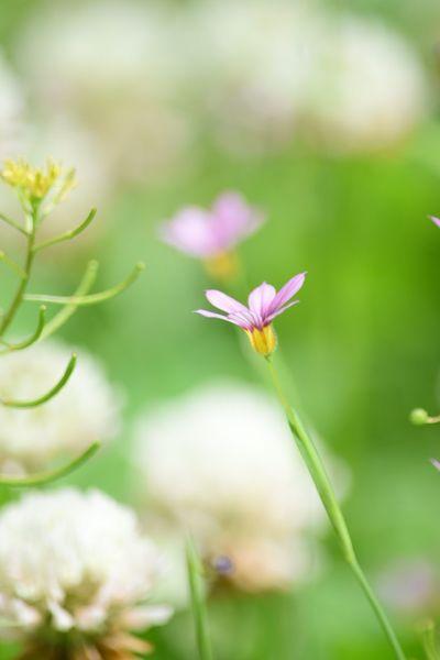 Flowerporn Flower Collection EyeEm Nature Lover EyeEm Best Shots - Nature