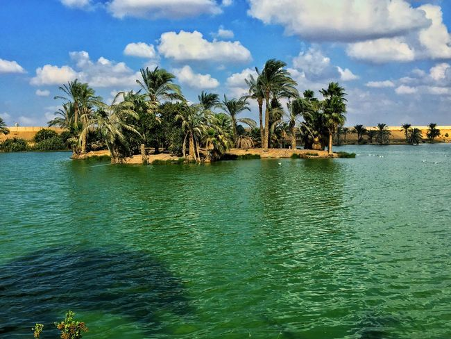 Ismailia Egypt Lake View Cloud - Sky Water Nature Beauty In Nature Waterfront Palm Tree Tree Tropical Climate Scenics Outdoors Beutiful  oasis