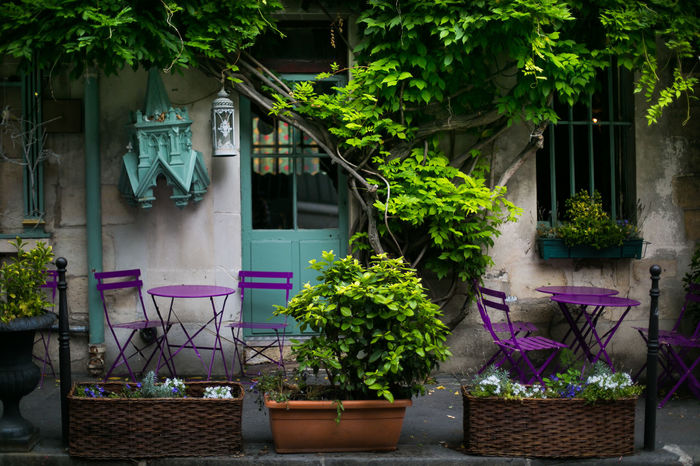 Beautiful Parisian cafe without people in Paris, France Beautiful France Paris Romantic Travel Architecture Building Exterior Built Structure Colorful Day Decoration Famous Place Flower French French Cafe French Style Growth Nature No People Outdoors Parisien Life Plant Potted Plant Tree Violet