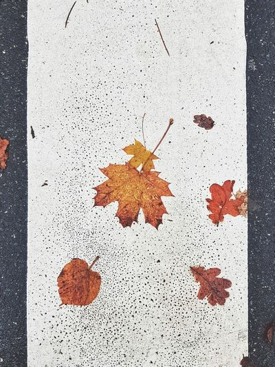Beatles Penny Lane  Leaves Leaf Fall Autumn Surfaces Textures Colourful Nature Mobile Phone Photography Mobile Photography Still Life Street Pedestrian Walkway Pedestrian Crossing Road Leafes On Road Nature City Life Season  Backgrounds Pattern Textured  Close-up
