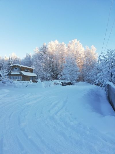 Snow covered trees and houses against sky
