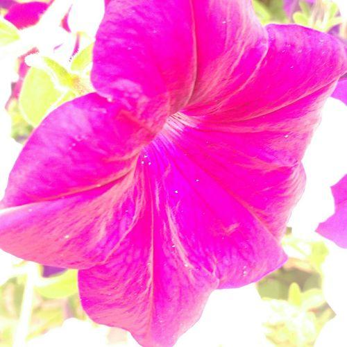Album rec Flowers