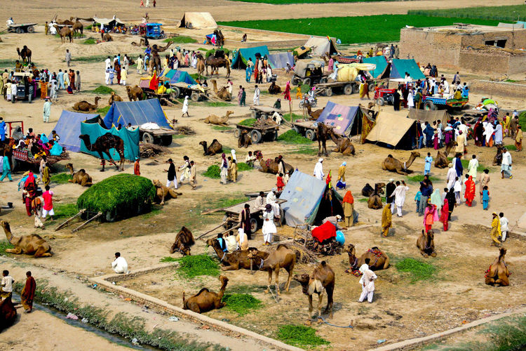 Camels village Iftikhar Iftikhar Photography Lahore Punjab Pakistan Camel Riding Camels Camel Man Camel People Camel Village Crowd Group Of People Large Group Of People Real People Men High Angle View Lifestyles Land Day Domestic Animals Architecture Mammal Women Nature Adult Sitting Leisure Activity Outdoors