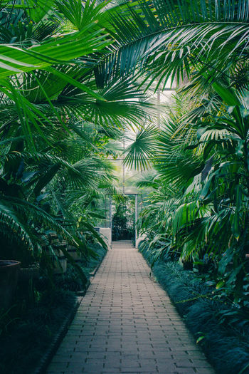 View of footpath amidst plants