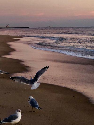 Birds on the 🏖