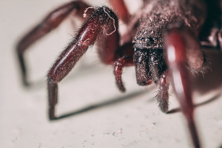Close-up Invertebrate Arachnid Animal Insect Selective Focus One Animal Spider Animal Themes Arthropod Animals In The Wild Animal Wildlife No People Animal Leg Day Zoology Jumping Spider Animal Body Part Outdoors