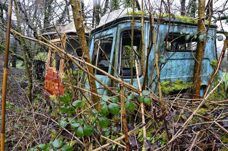 Back to nature Abandoned Bad Condition Close-up Damaged Day Decline Destruction Forest Grass Land Vehicle Mode Of Transport Nature No People Obsolete Outdoors Scenics Transportation Tree