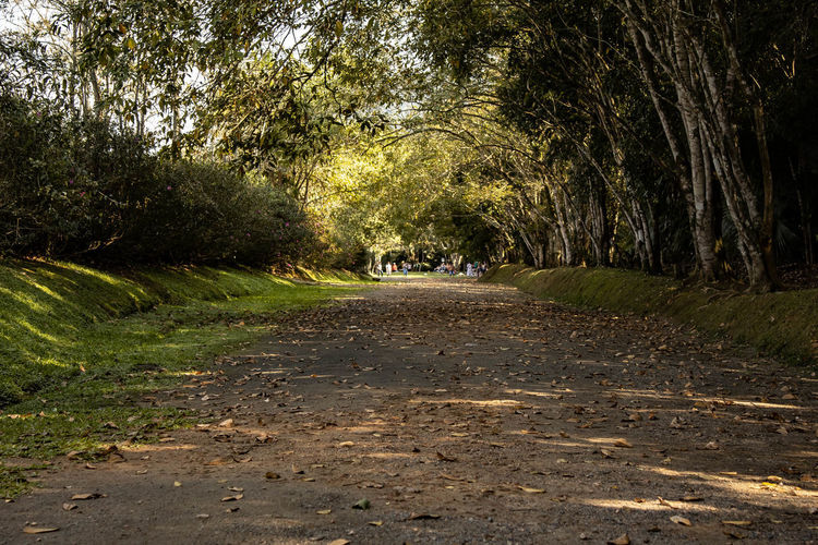 Beauty In Nature Direction Dirt Footpath Land Nature Outdoors Park Plant Road Tree