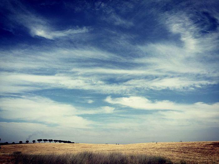白云下的橄榄树