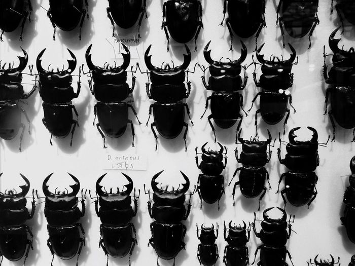 In A Row Retail  For Sale Indoors  No People Large Group Of Objects Store Variation Day Insects  Insect Stag Beetle クワガタ クワガタムシ Insect Photography 鍬形