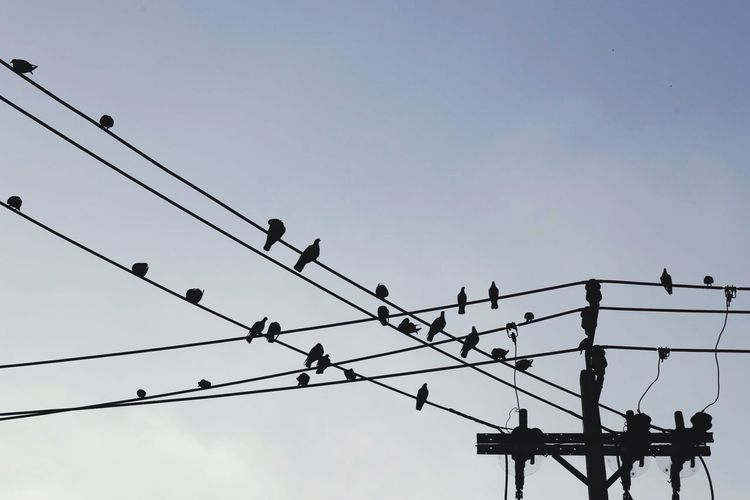 Silhouette Birds On Cables Against Clear Sky